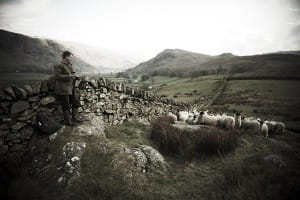 Farmer with sheep.