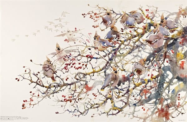 Waxwings, Darren Woodhead. Watercolour.