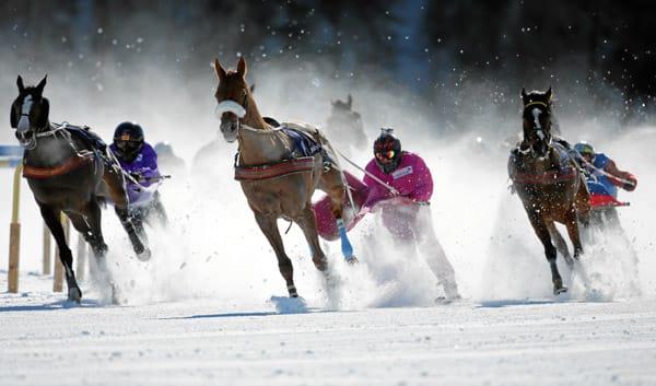 White Turf St. Moritz 2013: Skikjoering 'Credit Suisse - Grosser Preis von Celerina'