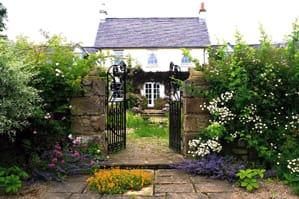 Summer Garden Visits