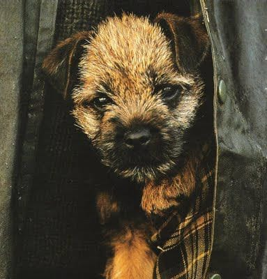 border in a barbour