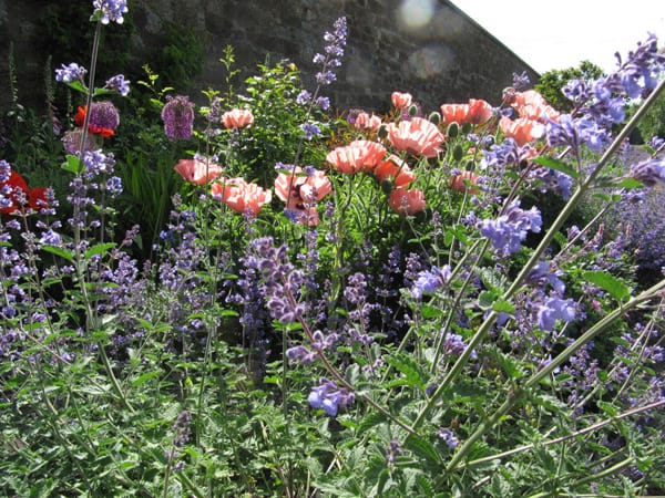 amisfield walled garden 1