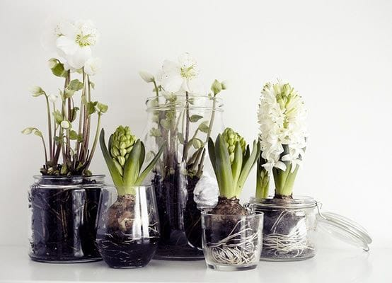 Beautiful bulbs for winter a hume country clothing blog for Amaryllis deco