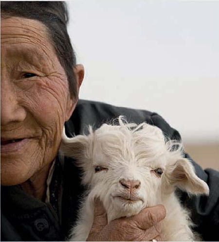 Baby cashmere from the Mongolian Steppes. Image source: Pinterest.