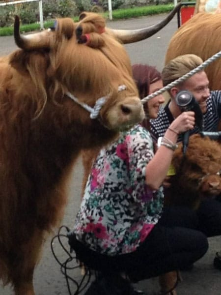 Highland Cow - Royal Highland Show