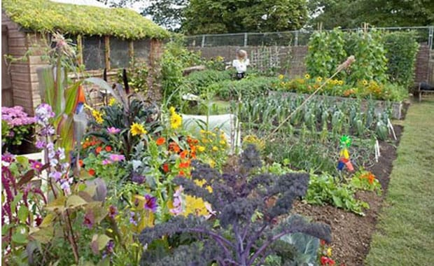 National Allotments Week, 8-13 Aug