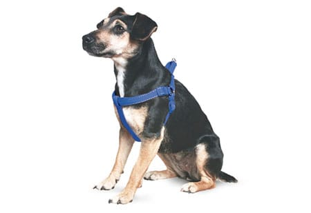 ancol-harness-blue