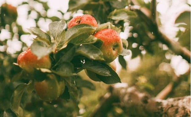 3 Good Reasons to Preserve Traditional Orchards