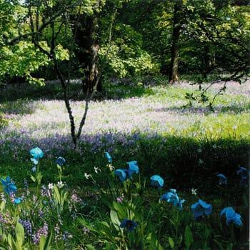 Spring Garden Visits: Scotland's Gardens