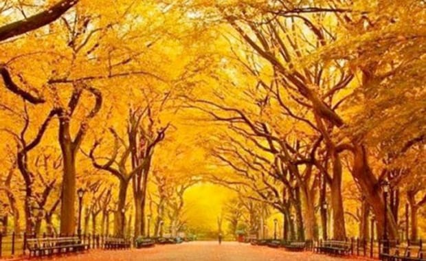Autumn Escapes