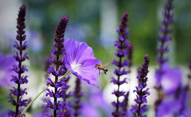 10 Fail Proof Plants Everyone Should Grow