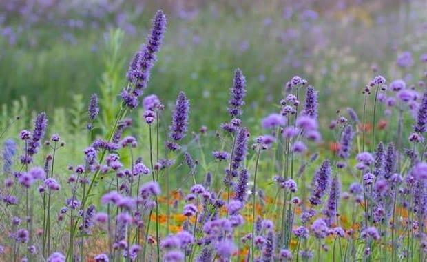 10 Fail Proof Late Season Plants