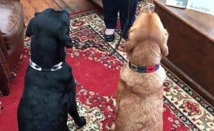 dog_collar_1