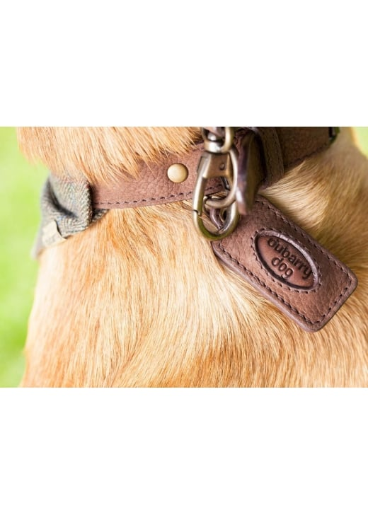 Dubarry Glenbrook Collar